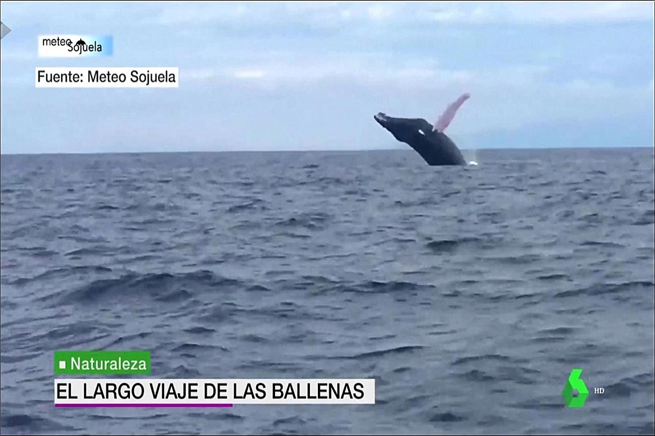 la sexta meteo ballenas meteosojuela